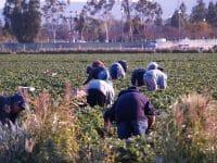 Προτάσεις του Ιατρικού Συλλόγου Αργολίδας για λήψη µέτρων κατά της διασποράς της πανδηµίας από τους εποχικούς εργάτες γης